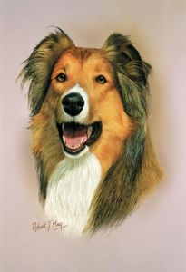 Rough Collie Head Study Print RMDH126